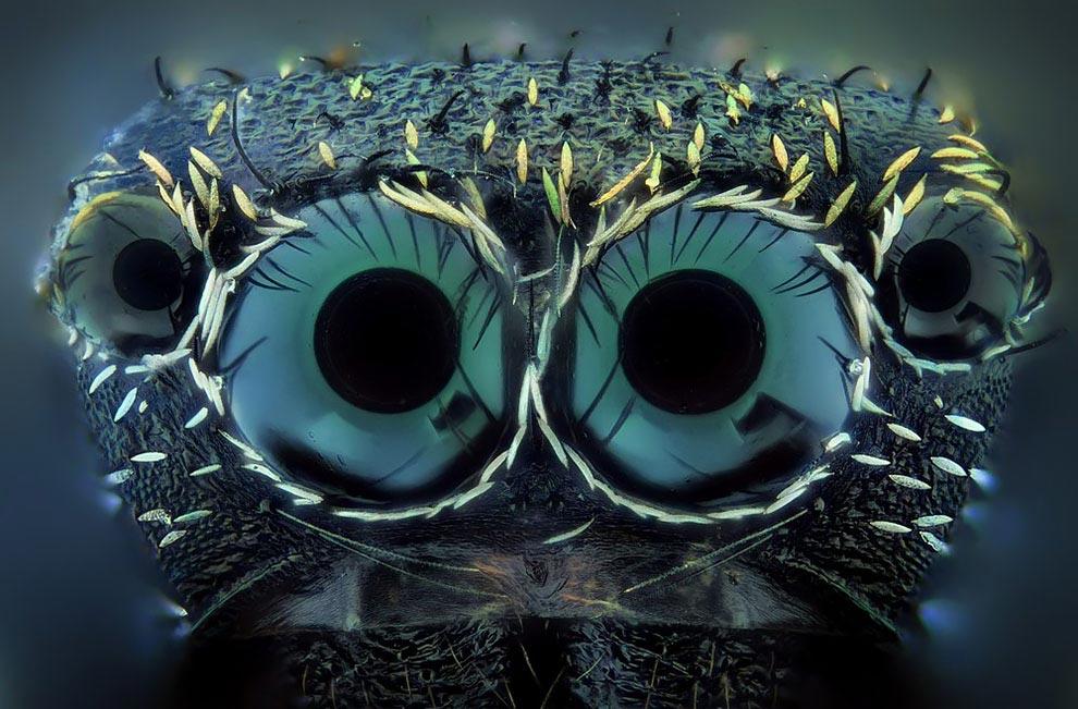 Хавьер Руперес Javier Ruperez Экстраординарное макросъемка крошечных существ