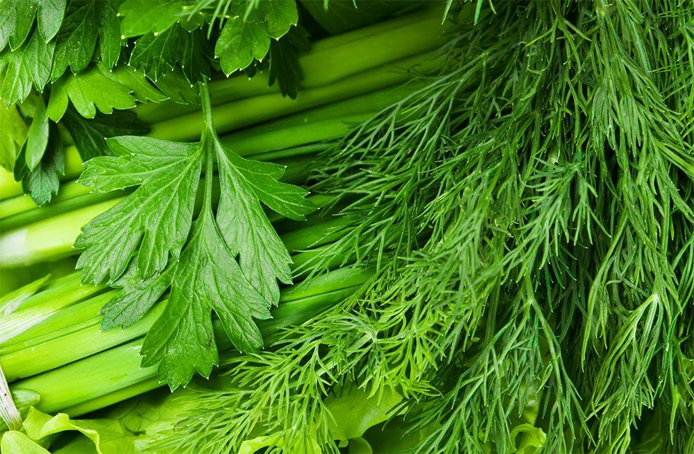 продукты можно хранить в морозилке Свежая зелень