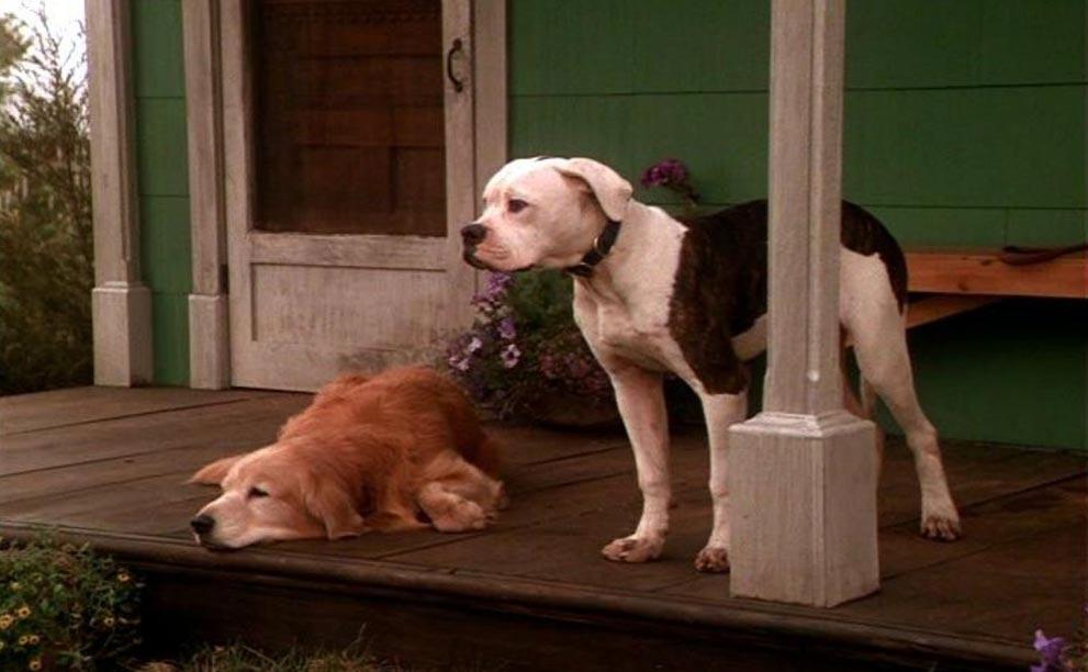 фильмы про животных Дорога домой: Невероятное путешествие