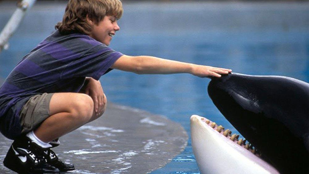 фильмы про животных Освободите Вилли