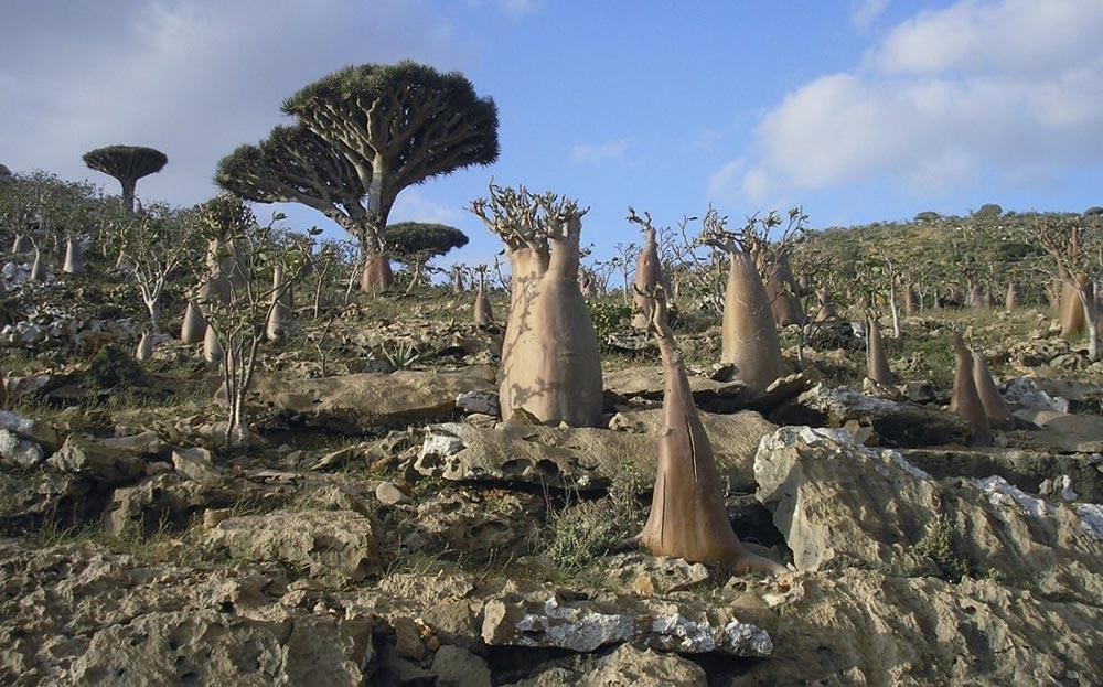 загадочные острова Сокотра