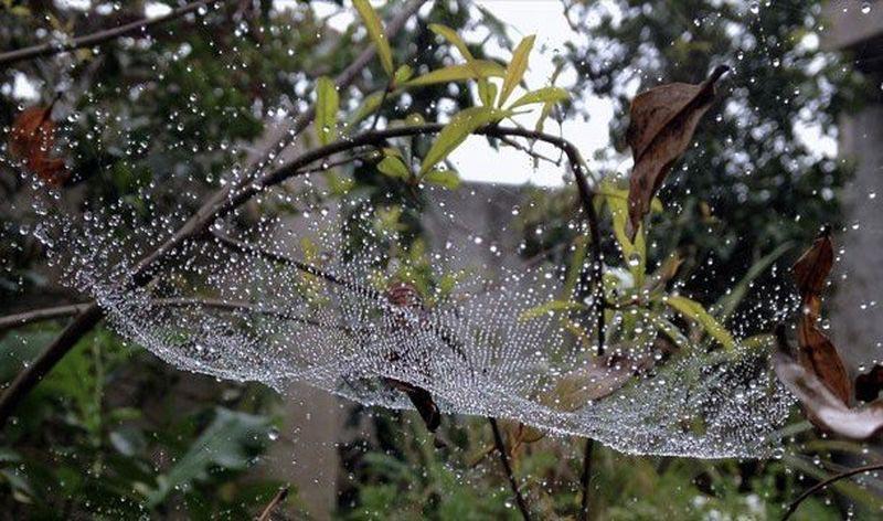 оптические явления в природе Роса на паутине