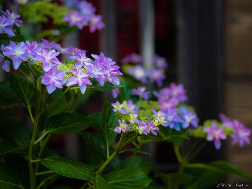 Keita Asakura Фотографии мирного мира цветов