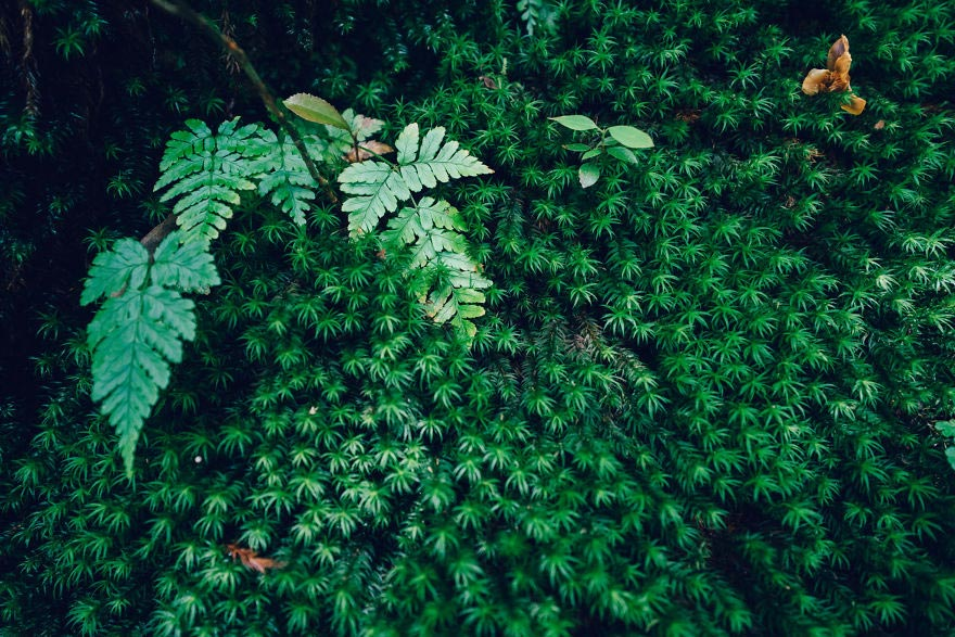 древний кедровый лес в Японии