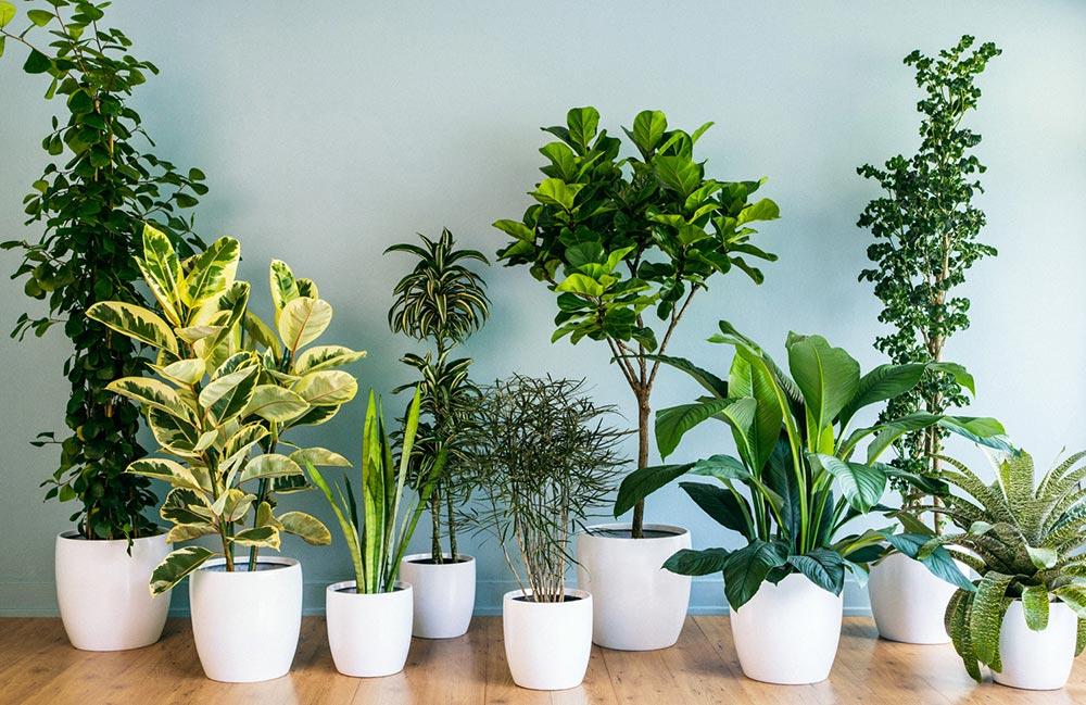 Как растения влияют на здоровье человека, любовь и настроение