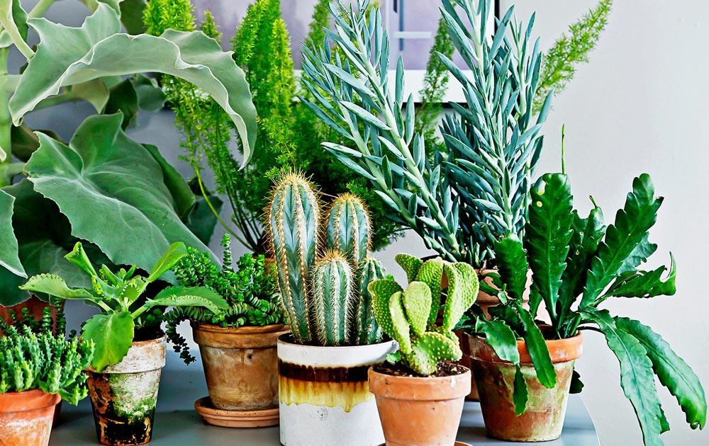 влияние растений на здоровье человека любовь настроение