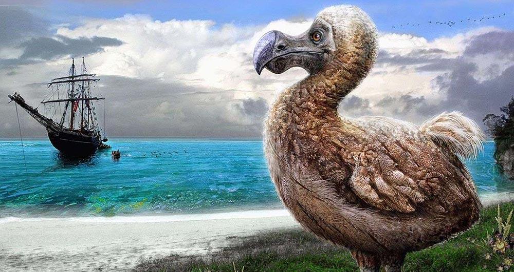 виды животных вымерли Маврикийский дронт