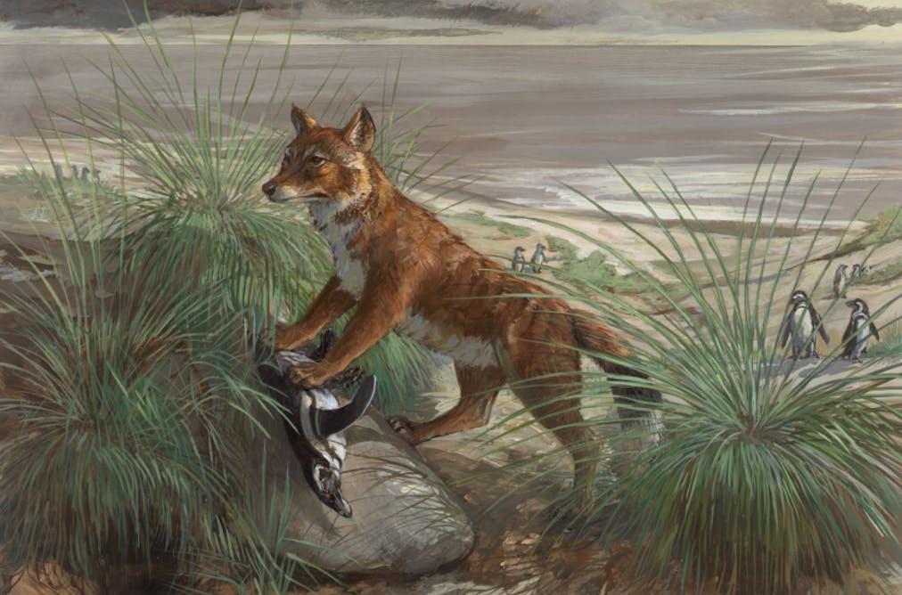 виды животных вымерли Фолклендская лисица