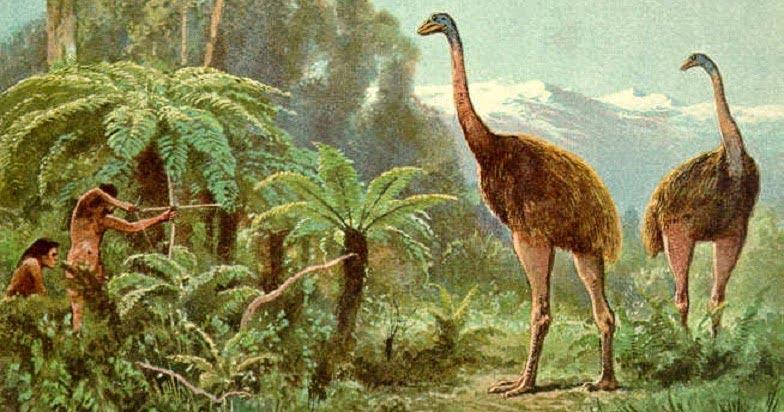 виды животных вымерли Моа