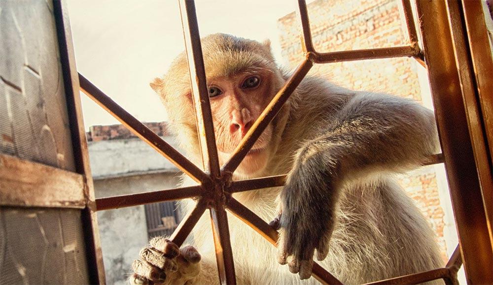 Отдых в Индии лайфхаки и правила безопасности обезьяны