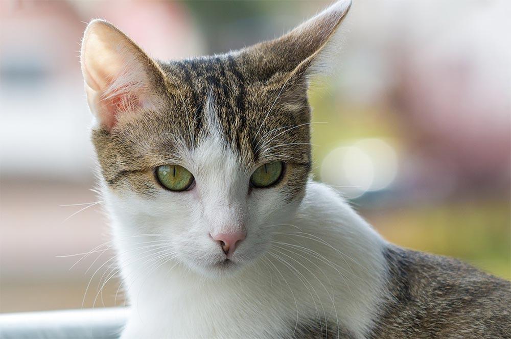 глупые животные Домашняя кошка