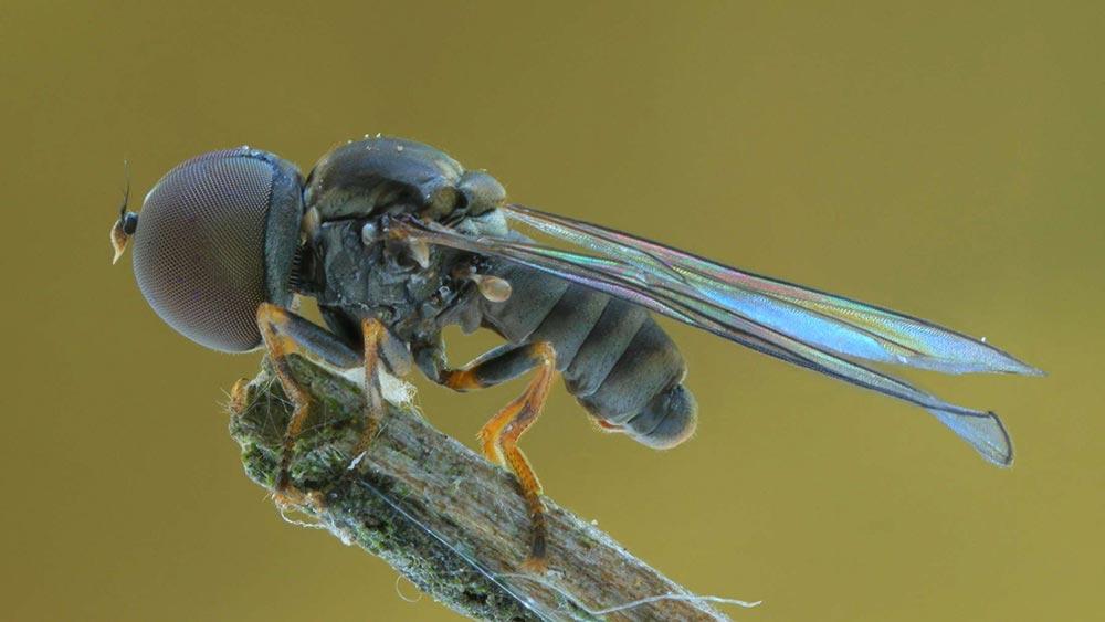 bizarre creatures discovered 9 - ТОП-10 причудливых видов живых существ, открытых недавно