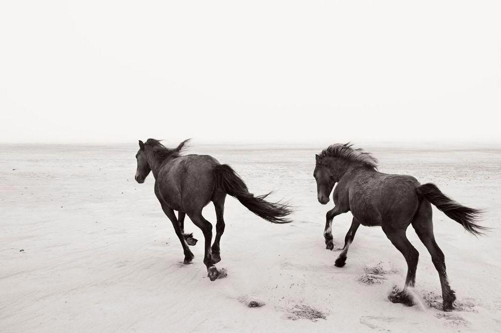 Дрю Доггетт Drew Doggett Лошади среди эпических исландских пейзажей