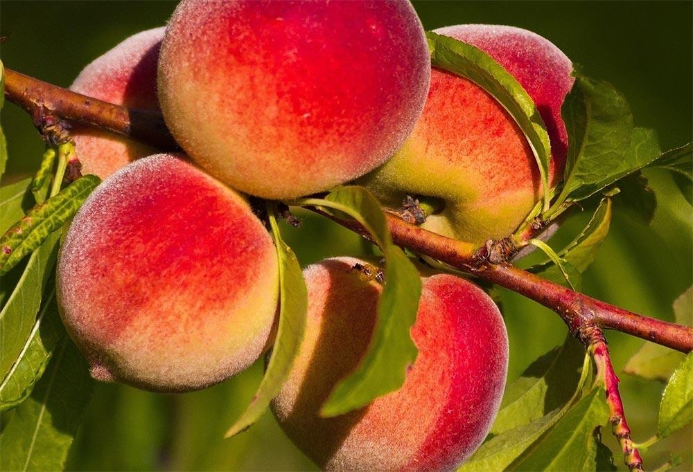 Таможенные пошлины плодовые растения