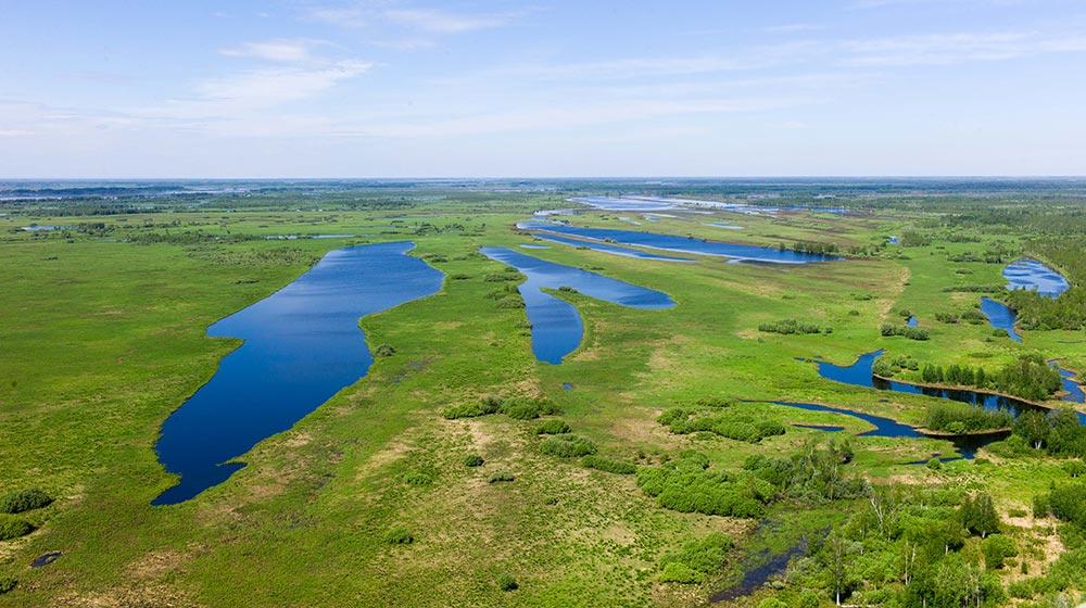 природный заповедник России Васюганские болота