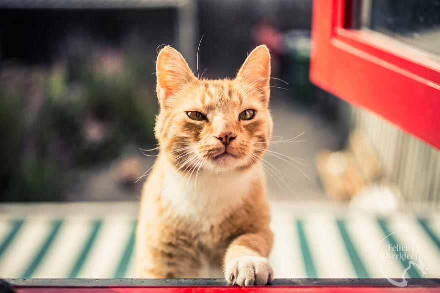 Felicity Berkleef Лучший предмет для фотографии - кошки