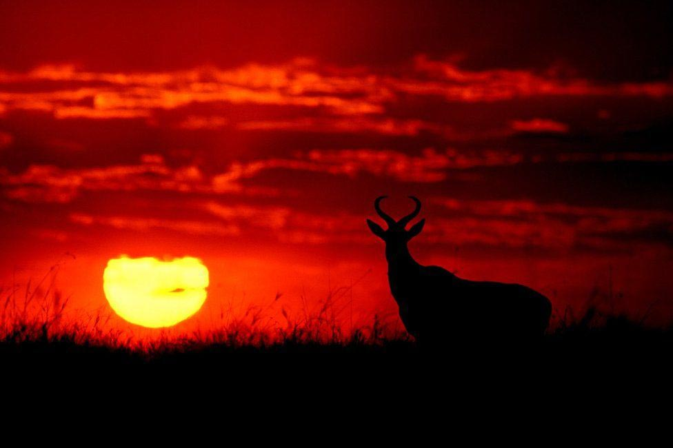 Wildlife Greg Du Toit силуэты животных Африки на рассвете и закате антилопа