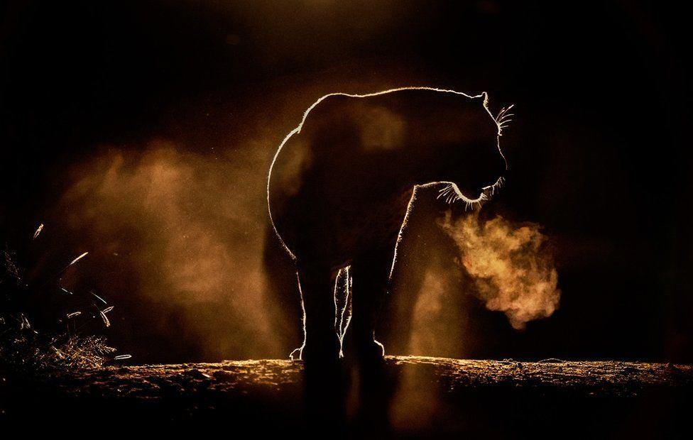 Wildlife Greg Du Toit силуэты животных Африки на рассвете и закате тигр