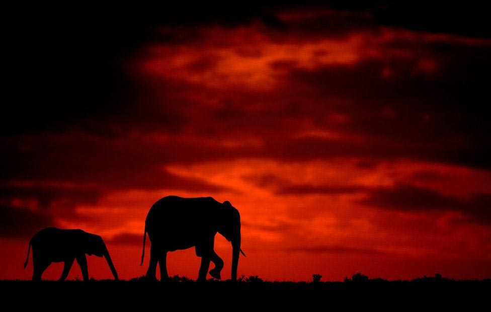 Wildlife Greg Du Toit силуэты животных Африки на рассвете и закате слоны