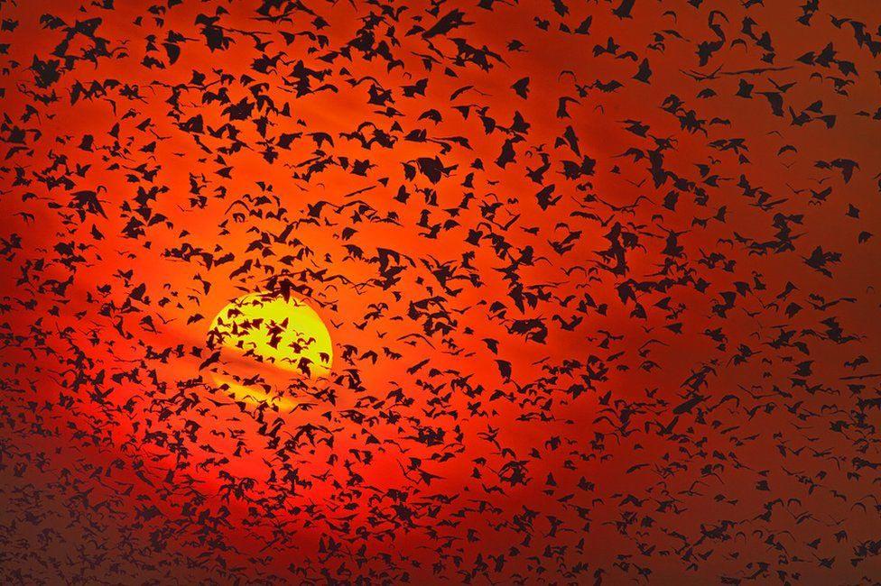 Wildlife Greg Du Toit силуэты животных Африки на рассвете и закате летучие мыши