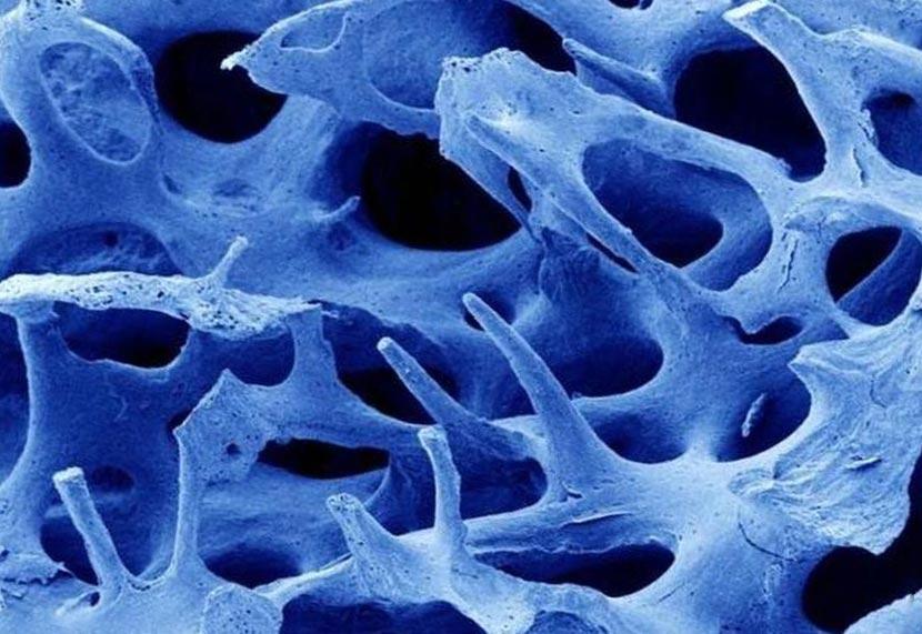 органы под микроскопом кость