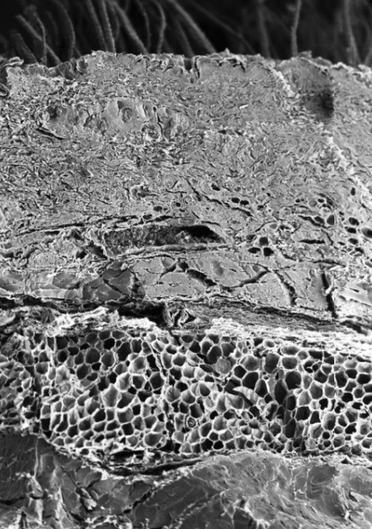 органы под микроскопом кожа