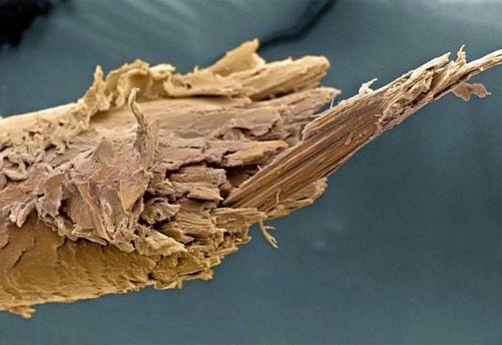 органы под микроскопом прядь волос