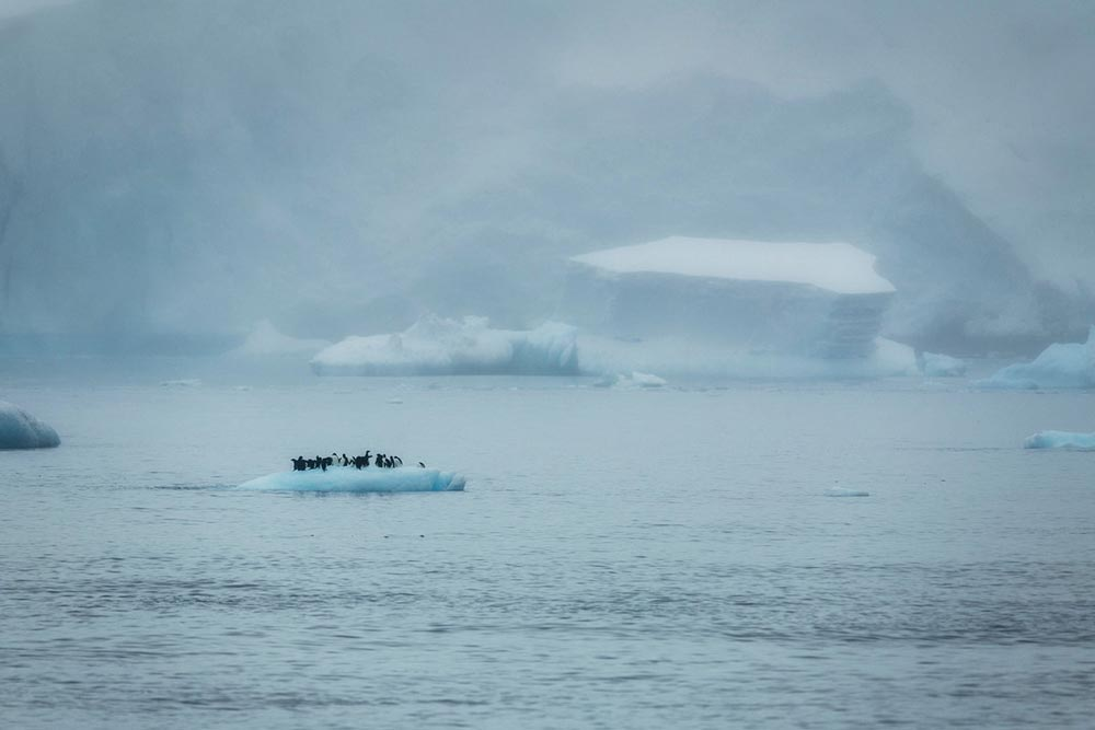 Шорт-лист фотоконкурса Фото земли Earth Photo 2018 Пингвины Адели на льдине Кристиан Алсунд