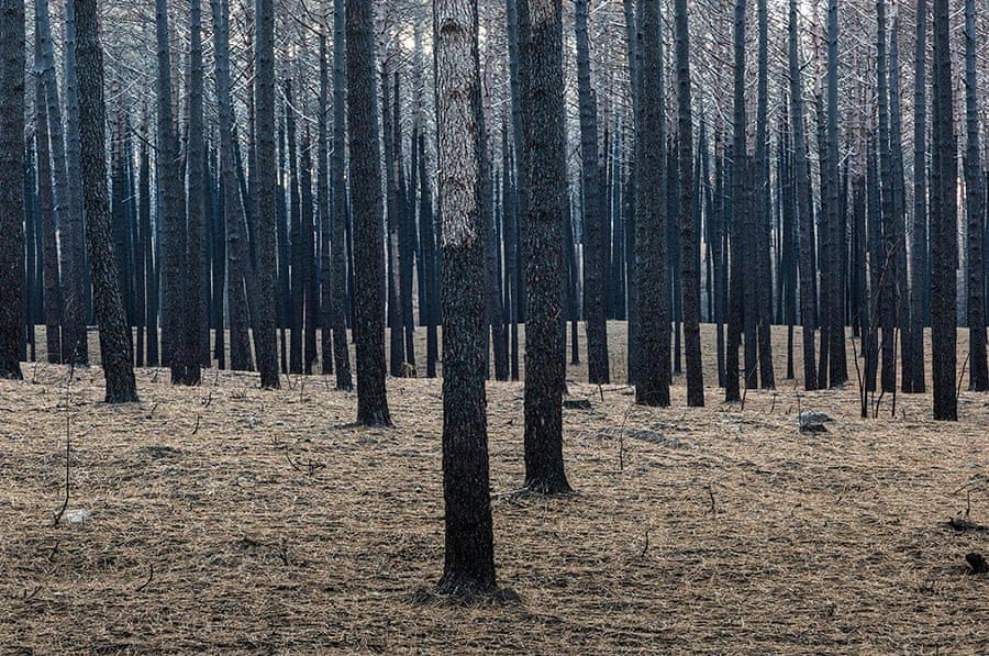 Шорт-лист фотоконкурса Фото земли Earth Photo 2018 Сожженные последствия Сосны Марк Бенхам