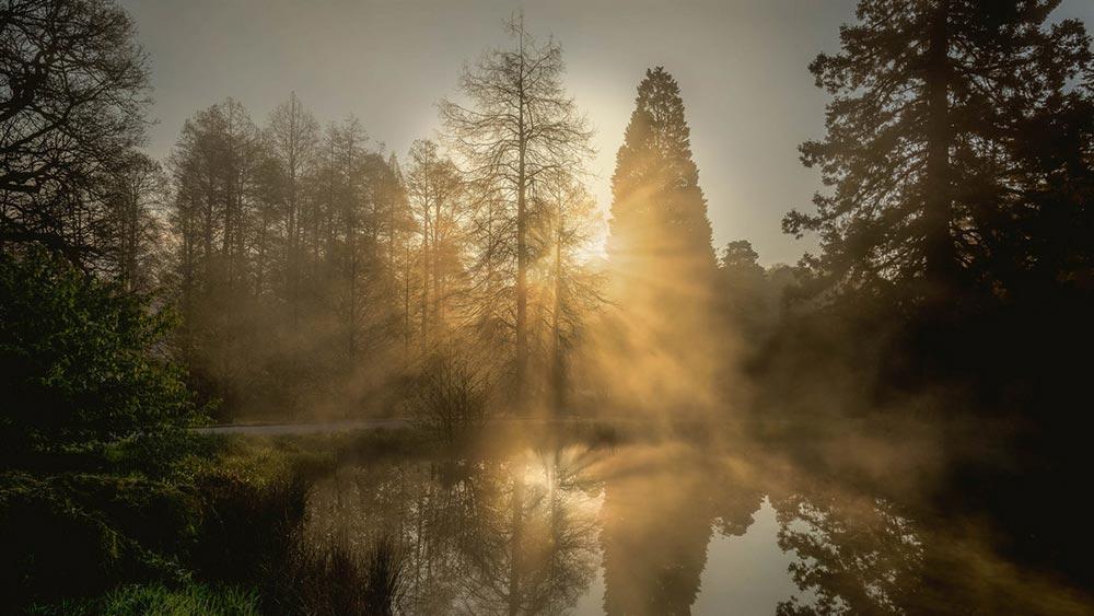 Шорт-лист фотоконкурса Фото земли Earth Photo 2018 Разделяя деревья Дэвид Дженнер