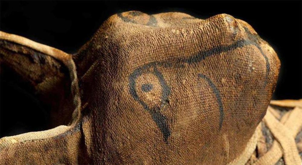 факты о мумиях Мумии животных