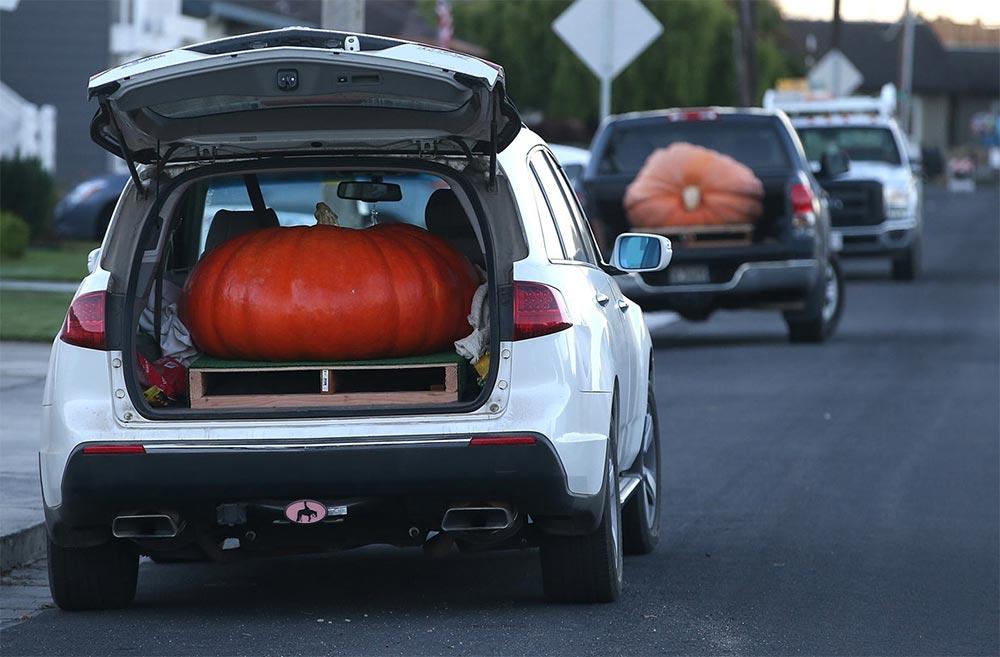 интересные факты о Хэллоуине Тыквенные рекорды