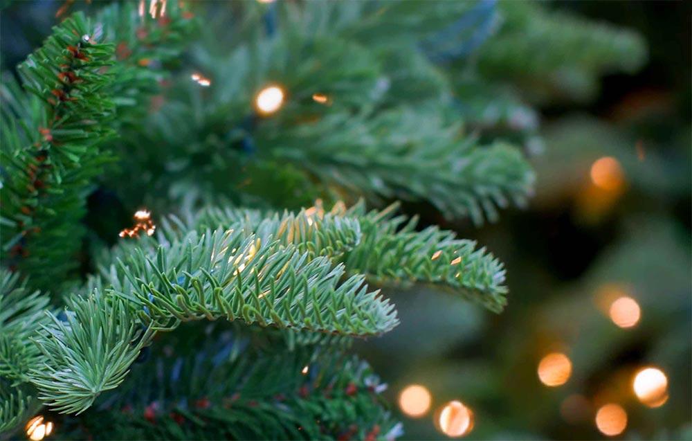 лайфхаки, как правильно выбрать живую елку